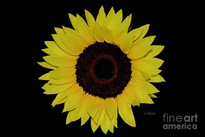 Photograph - The Perfect Sunflower by Jeannie Rhode