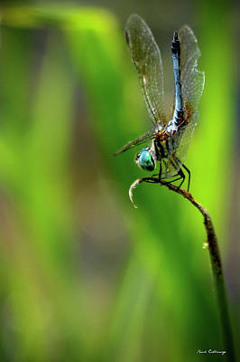 Art Print featuring the photograph The Performer Dragonfly Art by Reid Callaway