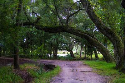 Tree Photograph - The Perimeter Road by J Darrell Hutto
