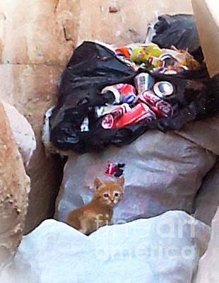 Digital Art - The Petra Kitten by Donna Munro