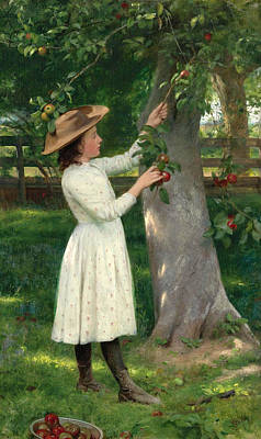 Painting - The Pick Of The Orchard. Picking Apples by Seymour Joseph Guy
