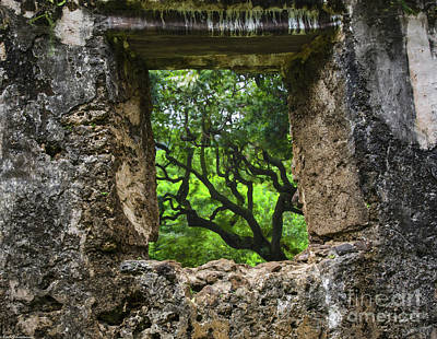 Photograph - The Picture In The Window by Mitch Shindelbower
