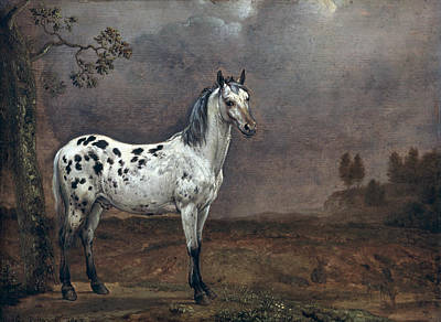 Wild Horse Painting - The Piebald Horse by Paulus Potter
