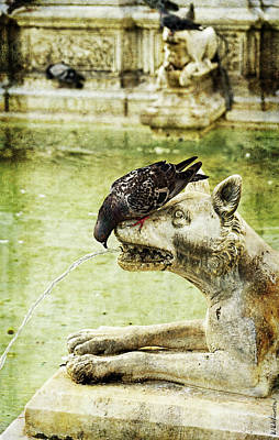 Photograph - The Pigeon And The Wolf - Siena by Weston Westmoreland