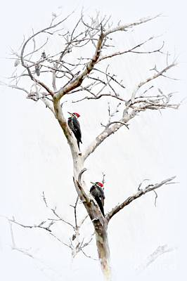 Pileated Woodpecker Photograph - The Pileated Pair by Benanne Stiens