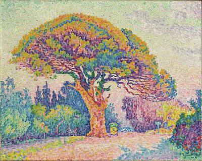 The Pine Tree At Saint Tropez Art Print