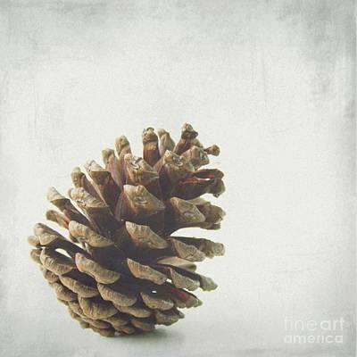 Kitchen Photograph - The Pinecones by MingTa Li