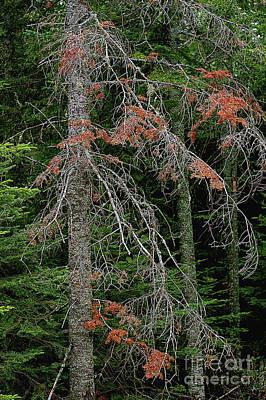 Photograph - The Pines by Randy Pollard