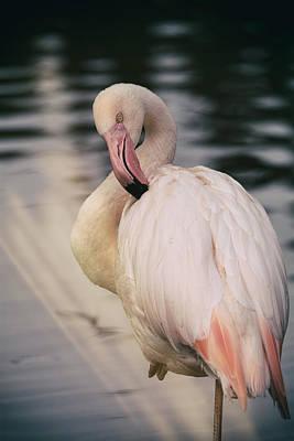 Photograph - The Pink Flamingo  by Saija Lehtonen