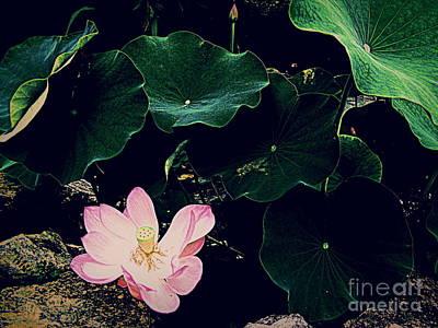 Photograph - The Pink Lotus by Nancy Kane Chapman