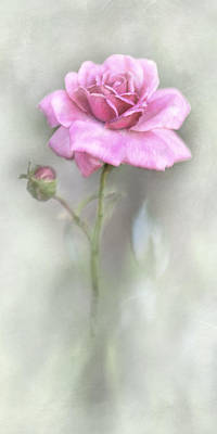 Photograph - The Pink Rose by David and Carol Kelly