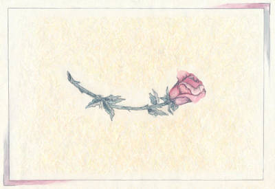 Drawing - The Pink Rose by Donna L Munro