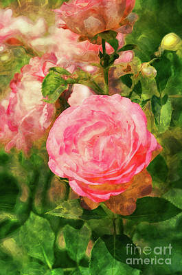 Photograph - The Pink Rose by Mary Machare