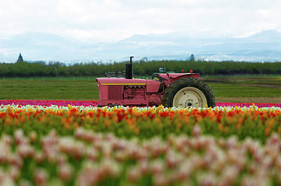 Photograph - The Pink Tractor by David Gn