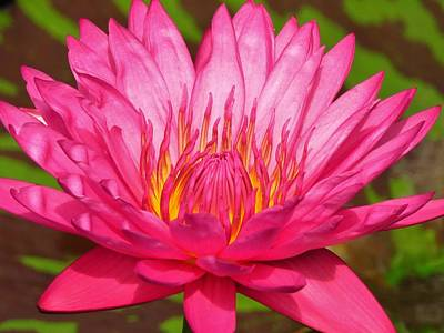 Photograph - The Pinkest Of Pinks by Lori Frisch