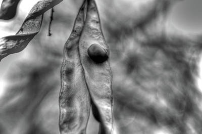 Photograph - The Pod by Jeffrey Platt