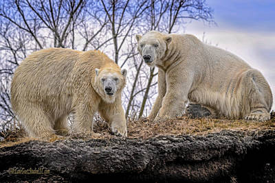 Photograph - The Polar Bears by LeeAnn McLaneGoetz McLaneGoetzStudioLLCcom