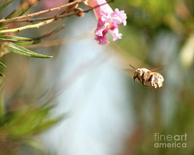Photograph - The Pollinator by Alycia Christine
