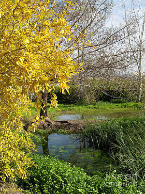 Israel Photograph - The Pond At Spring Time. 4 by Arik Baltinester