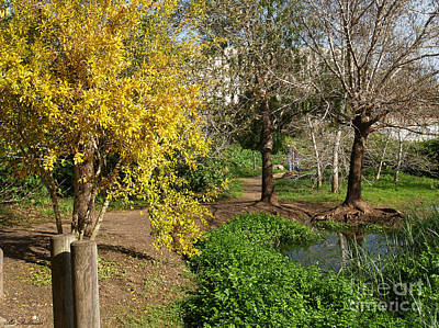 Israel Photograph - The Pond At Spring Time. by Arik Baltinester