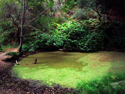 Photograph - The Pond Below Inspiration Point At Garland Park II by Joyce Dickens