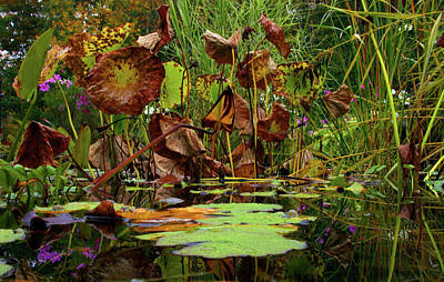 Photograph - The Pond In Fall by Christine Montague