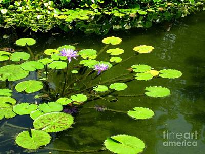 Photograph - The Pond by Robert D McBain