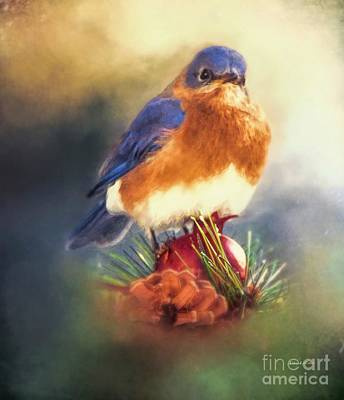 The Pondering Bluebird Art Print