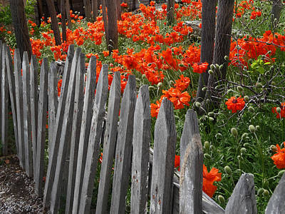 Photograph - The Poppy Fence by Jacqueline  DiAnne Wasson