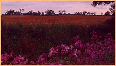 Photograph - The Poppy Field by Geoff Simmonds