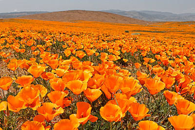 The Poppy Fields - Antelope Valley Art Print by Peter Tellone