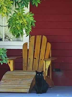 Photograph - The Porch Cat by Jacqueline  DiAnne Wasson