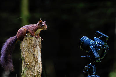 Photograph - The Poser by Andy Beattie Photography