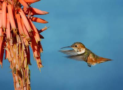 Photograph - The Power Of Aloe by Fraida Gutovich