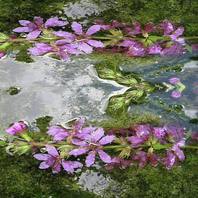 Photograph - The Power Of Flowers And Water by Tom Conway