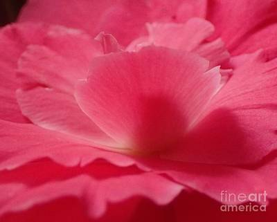 Photograph - The Power Of Pink by Christina Verdgeline