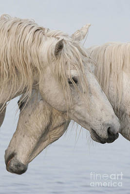 Best Friend Photograph - The Power Of Two by Carol Walker