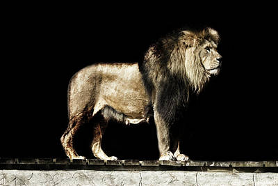 Leo Photograph - The Powerful by Martin Newman