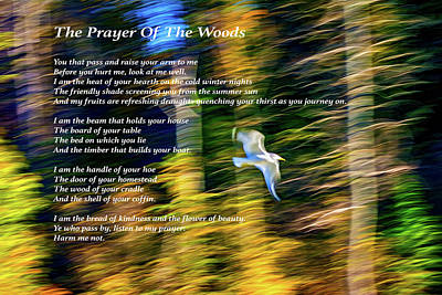 Sauble Photograph - The Prayer Of The Woods 3 by Steve Harrington