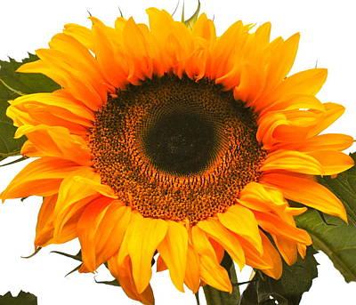 The Prettiest Sunflower Art Print