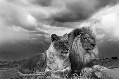 Photograph - The Pride Bw by Michael Damiani