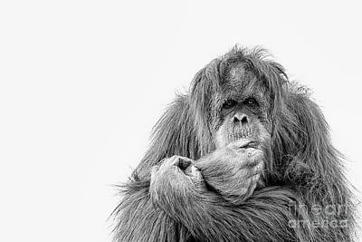 Photograph - The Primate Ponders by Ruth Jolly