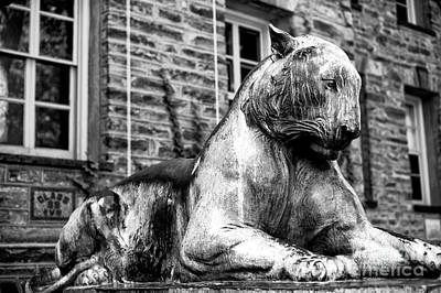 Photograph - The Princeton Tiger by John Rizzuto