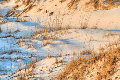 Photograph - The Pristine Dunes Of St Joe State Park by JC Findley