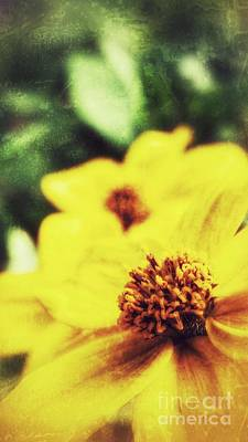 Photograph - The Prize by Isabella F Abbie Shores