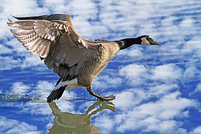 Branta Photograph - The Professional by Donna Kennedy