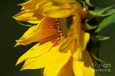 Yellow And Green Floral Photograph - The Promise by Sharon Talson