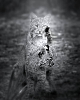 Bobcat Kitten Photograph - The Protector by Mark Andrew Thomas