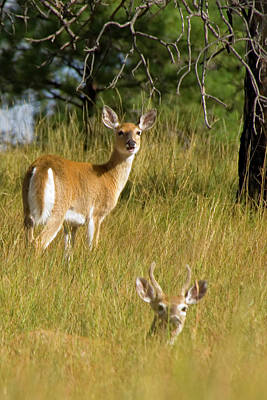 Deer Photograph - The Protector by Michael Barry