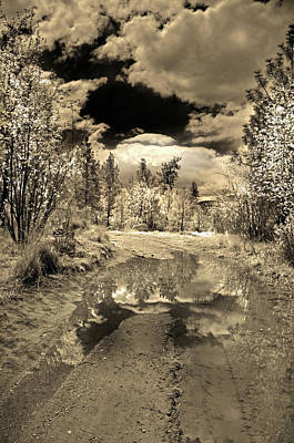 Path In Life Photograph - The Puddle by Tara Turner
